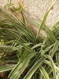 Zieleni i bielu roślina blisko ściany Fotografia Stock