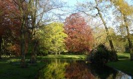 Zieleni i czerwoni drzewa Fotografia Royalty Free