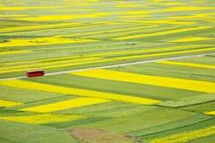 Zieleni i kolor żółty pole Zdjęcie Stock