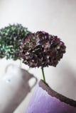 Zieleni i purpurowi hortensja kwiaty Obrazy Royalty Free
