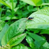 Zieleni insekty obrazy stock