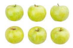 Zieleni jabłka fotografia royalty free