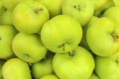Zieleni jabłka Obrazy Royalty Free