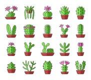 Zieleni kaktusy z różowymi kwiatami Pustynne rośliny dla terrariów a Obraz Stock