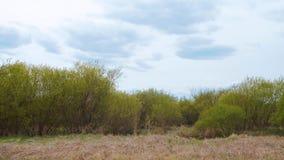 Zieleni krzaki i chmurny niebo z kopii przestrzenią zdjęcie wideo