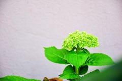 Zieleni kwiaty Obrazy Royalty Free