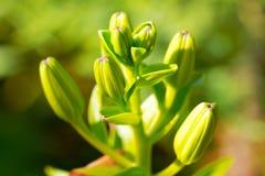 Zieleni kwiaty Fotografia Royalty Free