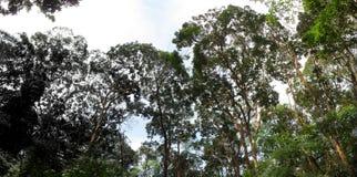 Zieleni lasowi drzewa Zdjęcia Royalty Free