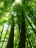 Zieleni lasowi treetops Zdjęcie Stock