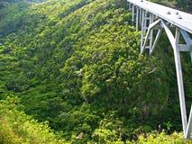 Zieleni lasy, piękny natura Zdjęcie Stock