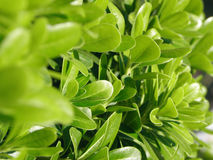 zieleni liść Obrazy Royalty Free
