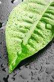 zieleni liść Obraz Stock