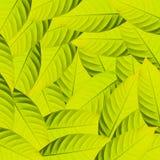 zieleni liść Zdjęcia Royalty Free