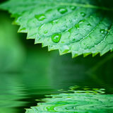 Zieleni liść odbijający w wodnym zbliżeniu Fotografia Stock