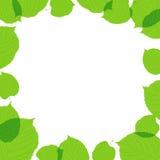 Zieleni liść rama na biały tle Zdjęcie Royalty Free