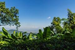 Zieleni liście banana, bambusa i drzewa rama z, Natury rama zielony urlop rozgałęzia się na błękitnym Obraz Royalty Free
