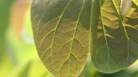 Zieleni liście i gałąź w wiatrze zdjęcie wideo