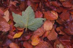 Zieleni liście na grund między innymi orangle liśćmi obraz stock