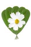 Zieleni liści kwiaty Zdjęcia Royalty Free