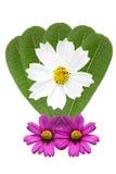 Zieleni liści kwiaty Obrazy Stock