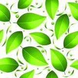zieleni liść wzór bezszwowy Fotografia Stock