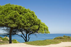 zieleni luksusowi drzewa Obrazy Royalty Free
