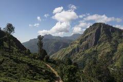 Zieleni montains z herbacianymi plantacjami Ella, Sri Lanka Zdjęcia Royalty Free