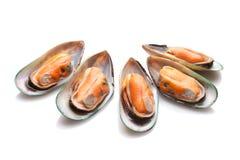 zieleni mussels Zdjęcia Royalty Free