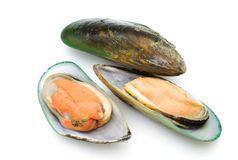 zieleni mussels obrazy royalty free