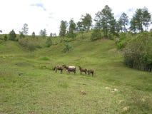 Zieleni obliczenia z mułami i koniami fotografia stock