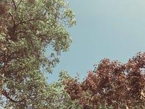 Zieleni okwitnięć drzewa w miasto jardzie w suny dni agains niebo Zamyka w górę strzału zdjęcia royalty free