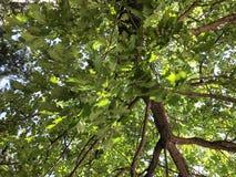 Zieleni okwitnięć drzewa w miasto jardzie w suny dniu Zamyka w górę strzału fotografia stock