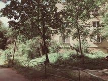 Zieleni okwitnięć drzewa w miasto jardzie w suny dniu Zamyka w górę strzału zdjęcia stock