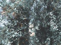 Zieleni okwitnięć drzewa w miasto jardzie w suny dniu Zamyka w górę strzału zdjęcia royalty free