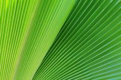 Zieleni palma liście w naturze fotografia royalty free