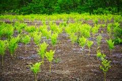 Zieleni paprociowi liście w lasowym Kamchatka, Rosja Fotografia Royalty Free