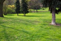 zieleni parkowi drzewa Zdjęcie Stock