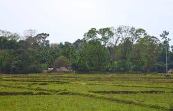Zieleni pola, drzewa i Odległe Plemienne budy, - krajobraz przy Baratang wyspą, Andaman Nicobar, India obraz stock