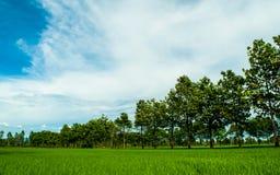 Zieleni pola, drzewa i piękny niebieskie niebo z białym chmurnym tłem w wieś krajobrazie, patrzeją świeżymi i relaksują obrazy stock