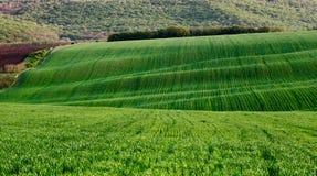 Zieleni pola i bosky wzgórza Obraz Royalty Free