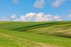Zieleni pola na słonecznym dniu zdjęcie royalty free
