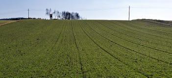 Zieleni pola na wzgórzu Obraz Royalty Free