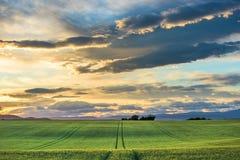 Zieleni pola przy zmierzchem w Provence Fotografia Stock