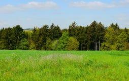 Zieleni poly lata słońca natura zasadza lasowego Germany Zdjęcie Stock
