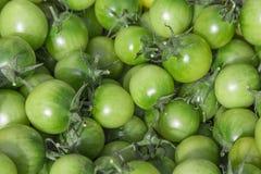 Zieleni pomidory w koszu na owocowi rolnicy Niedziela wprowadzać na rynek Szczegółowy zakończenie up z żywymi błyszczącymi kolora Obrazy Stock
