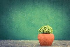 Zieleni pothos houseplants Fotografia Stock