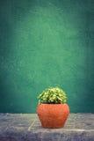 Zieleni pothos houseplants Zdjęcia Royalty Free