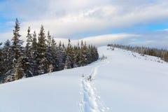 Zieleni puszyści drzewa zakrywający z płatkami śniegu Zdjęcia Stock