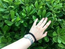 Zieleni ręka i liście green ogrodowa Obraz Stock