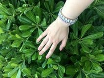 Zieleni ręka i liście green ogrodowa Zdjęcia Royalty Free